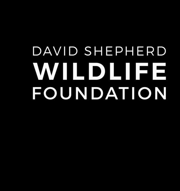 Wildlife Artist of the Year | DSWF Cheetah Print