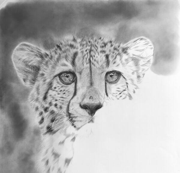 Black and white cheetah drawing