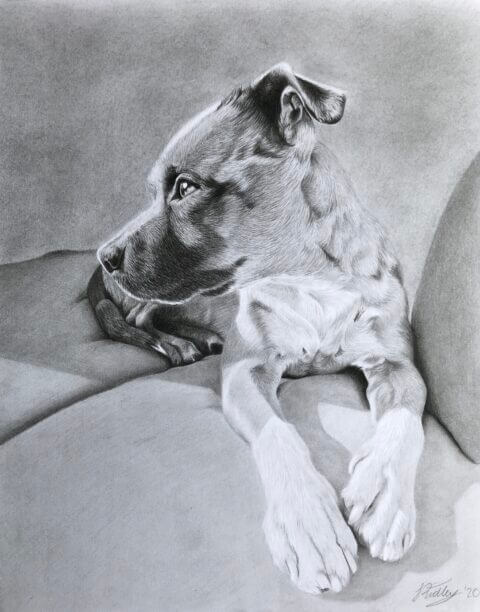 Nero | Dog portrait | Pet portrait