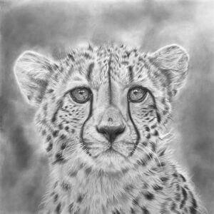 Cheetah drawing progress