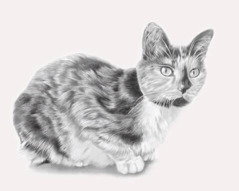 Pickle | Cat Portrait | Pet portrait