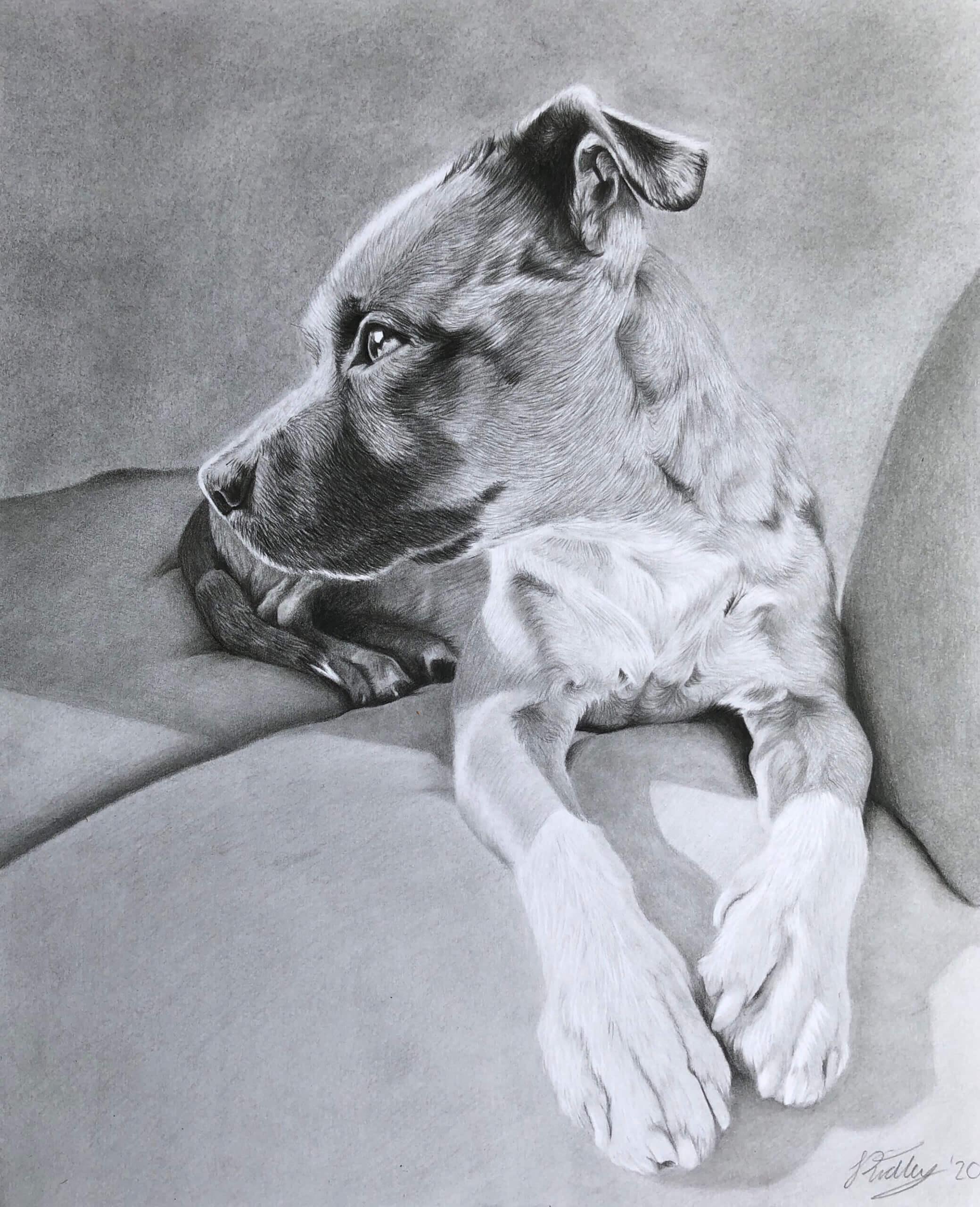 pet portrait Reference photos | Dog portrait photo