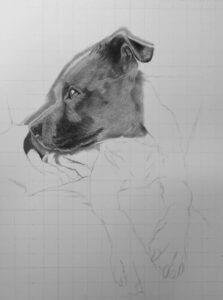 Nero | Dog Portrait