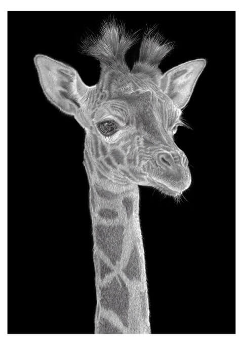 'Tuft' | Giraffe Artwork | Original Wildlife Art