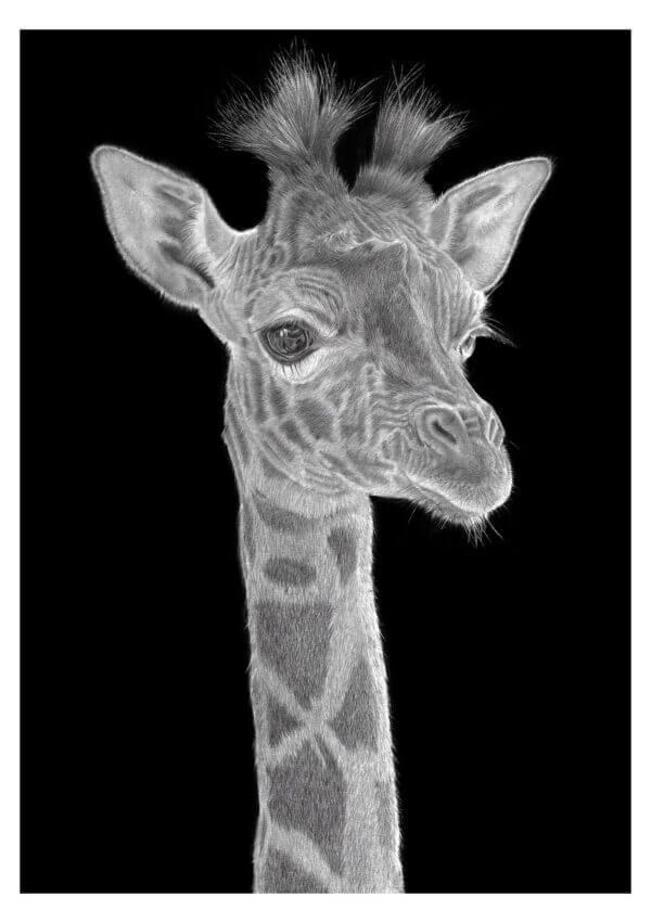 Giraffe print | Original giraffe art drawing