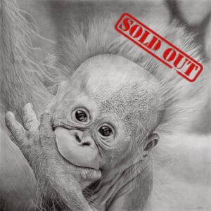 Orangutan Fundraiser Print