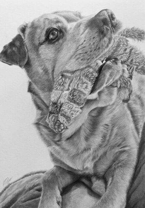 Pet portrait black and white