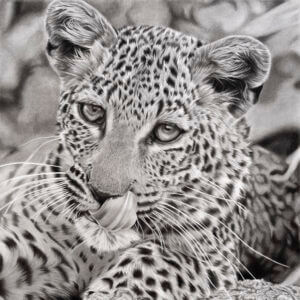 leopard drawing | leopard print