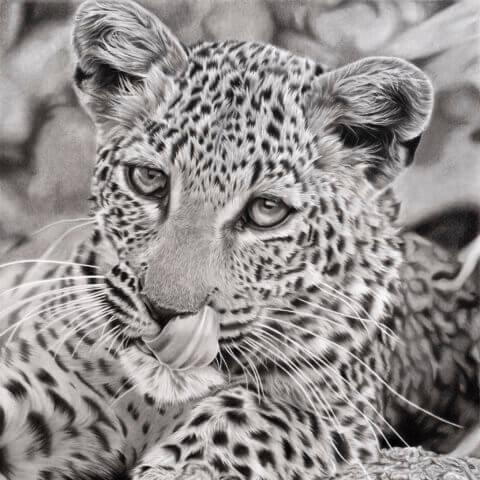 leopard drawing   leopard print