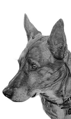 cross breed dog portrait